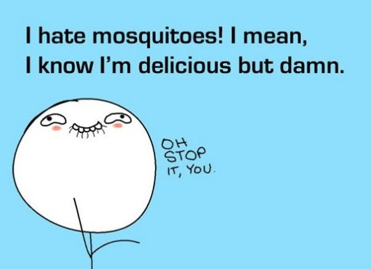 i hate mosquitoes, mosquitoes love me