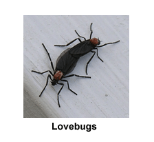 Top 30 Most Common Bugs In Florida | BugOfff com