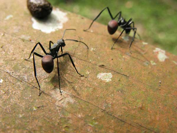 Get Rid Of Mosquitoes In House Naturally