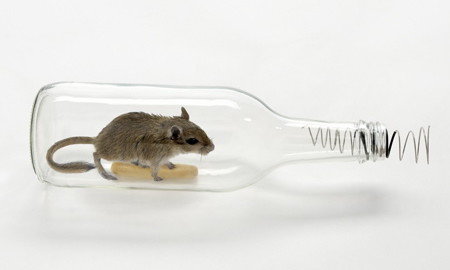 How To Get Rid Of Mice In House Without Killing Them