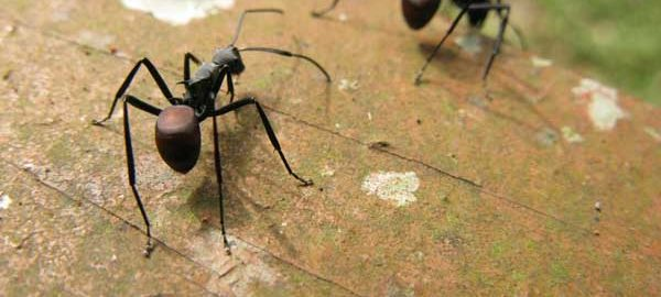 How To Get Rid Of Ants Without Killing Them Bugofffcom